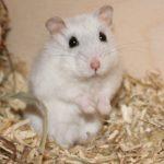 Verhalten des Hamsters deuten