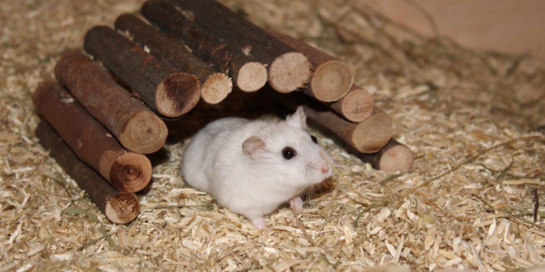 Weidenbrücke für den Hamster
