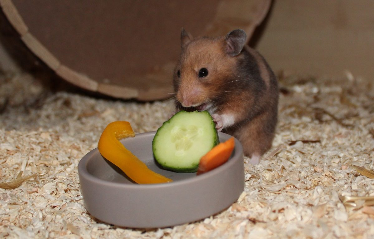 Gesundes Hamsterfutter