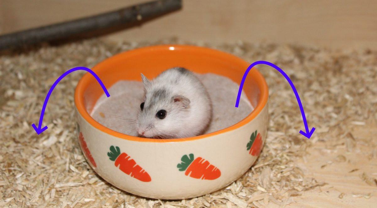 Hamster Sand in einer Schale