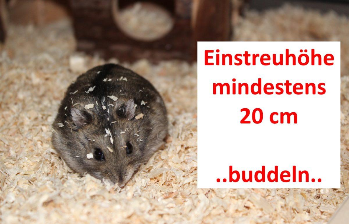Einstreuhöhe im artgerechten Hamsterkäfig