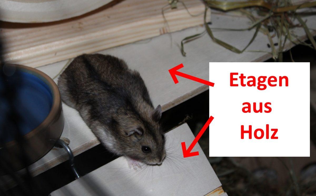 Etagen aus Holz machen Hamsterkäfig artgerecht