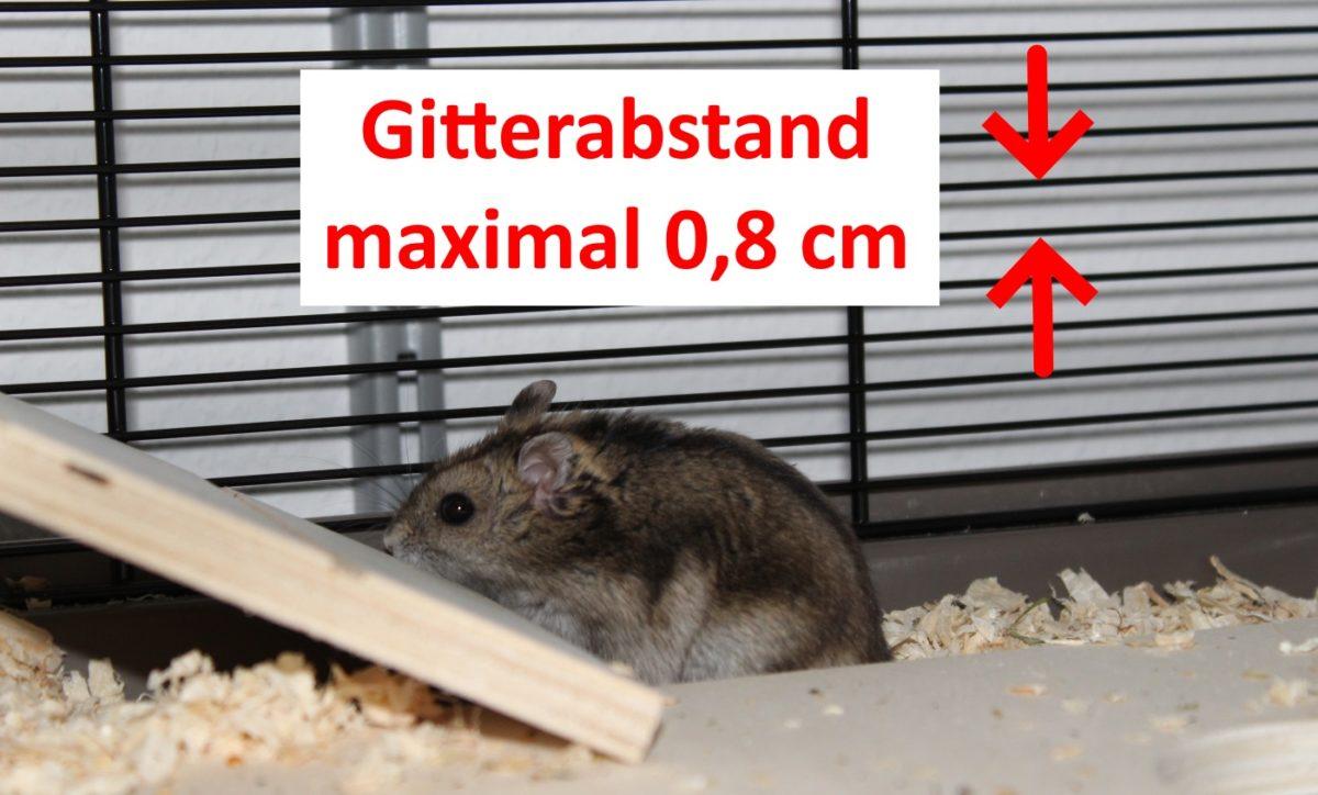 Gitterabstand beim Hamsterkäfig