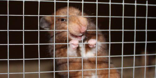 Hamster beißt - Ursachen und Abhilfe