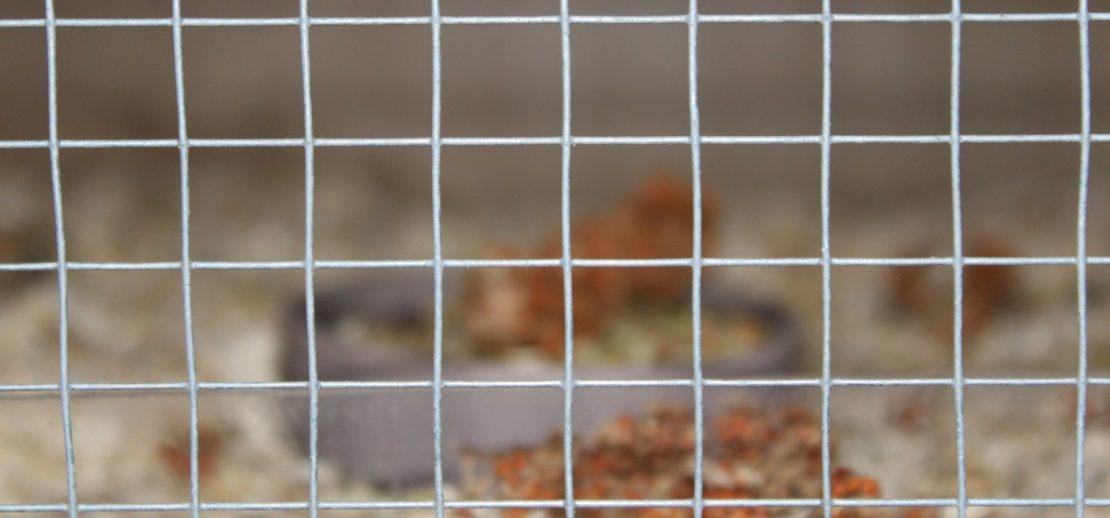 Der optimale Hamster Draht