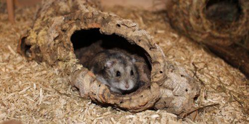 Hamster Geräusche - Lautsprache