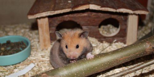 Artgerecht Hamster halten