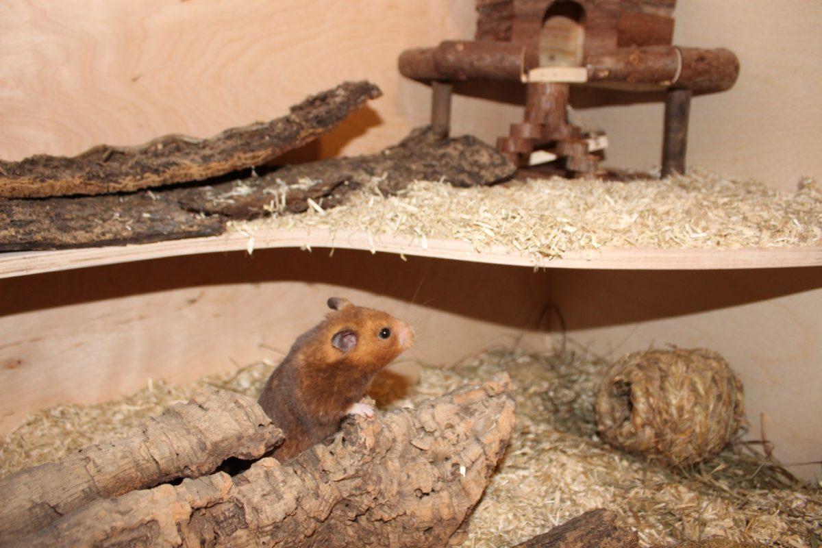 Viel Platz zum Hamster halten einplanen