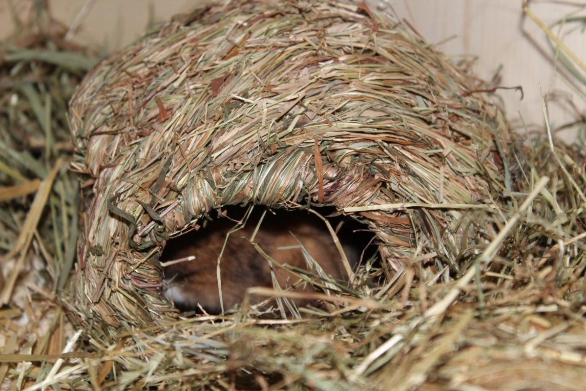 Hamster zieht sich zurück