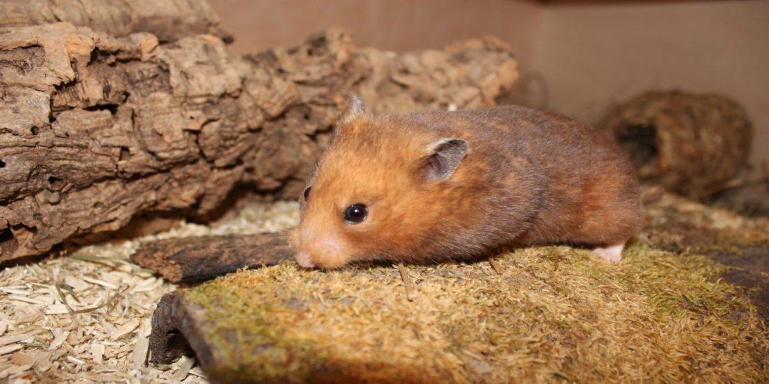 Hamsterkäfig artgerecht