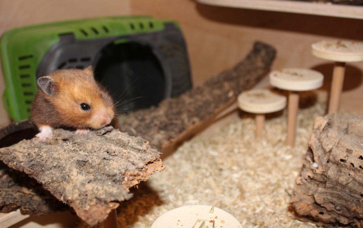 Neuer Hamster beißt