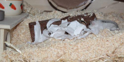 Nistmaterial für den Hamster