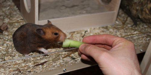 Checkliste Hamsterernährung und Futter