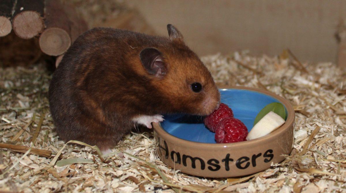 Snacks als Beeren und Obst