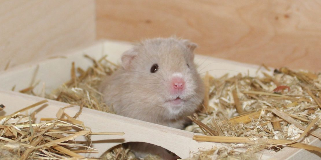Hamster im Urlaub