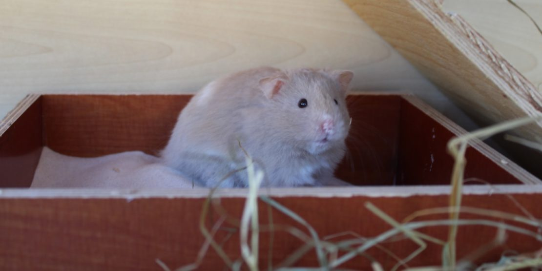 Stinken Hamster wirklich? - Wir beantworten eure Fragen
