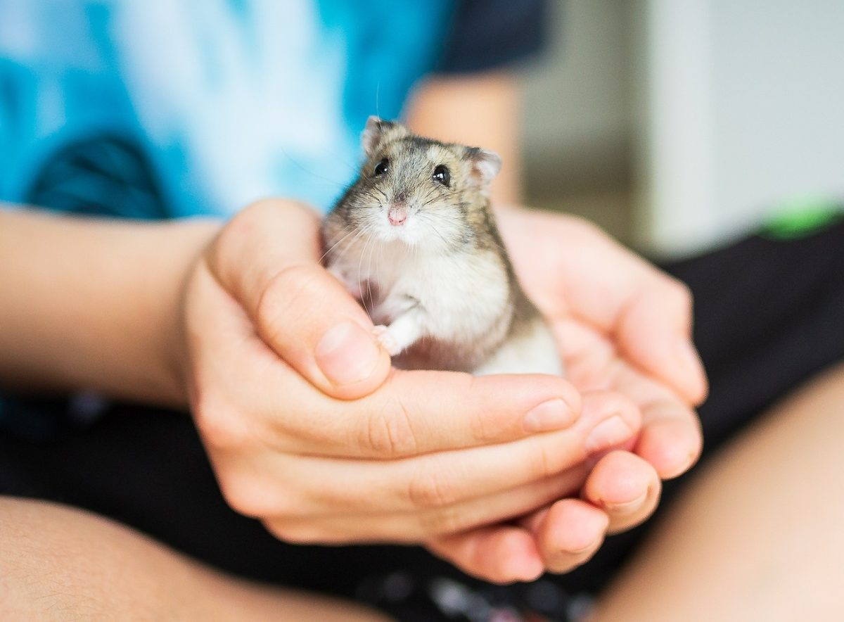 Hamster Abgeben