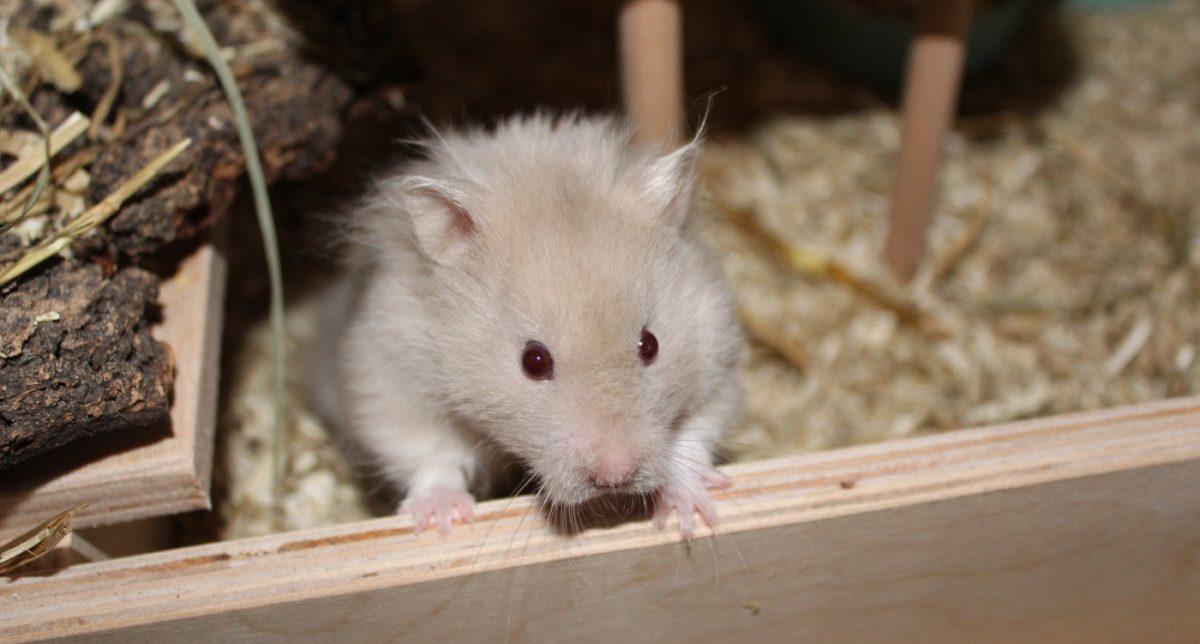 Hamsterzubehör Checkliste Käfig