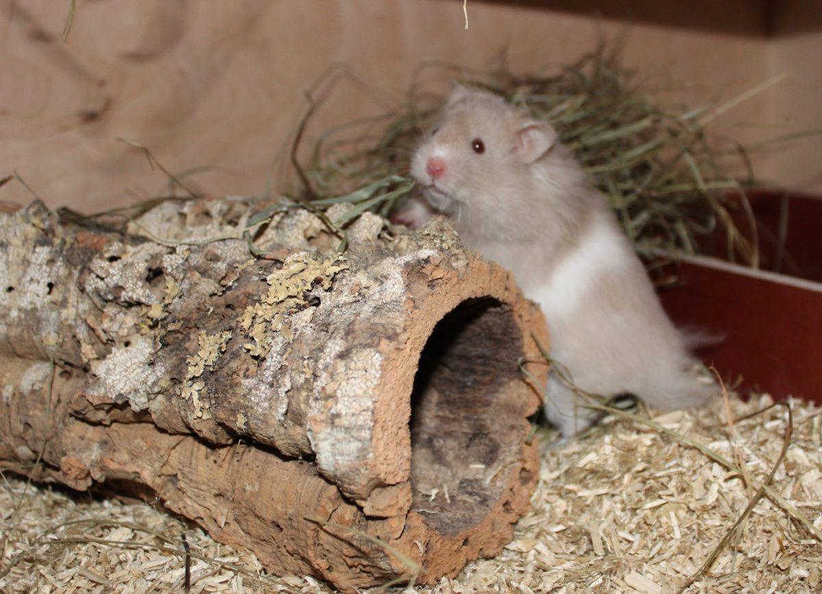Weiteres Hamsterzubehör