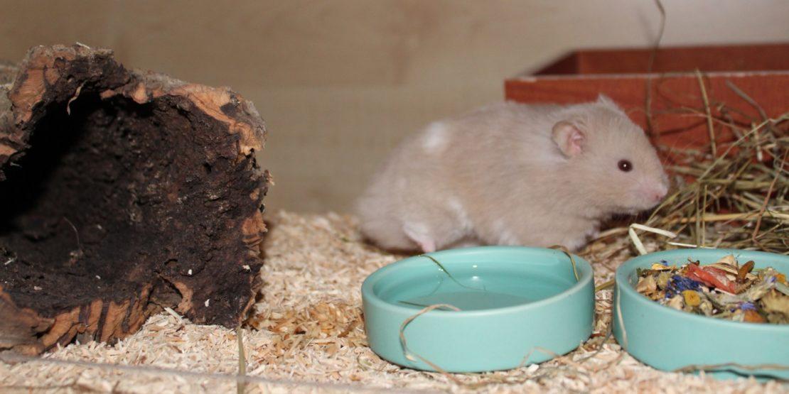 Sinnvolles Hamsterzubehör